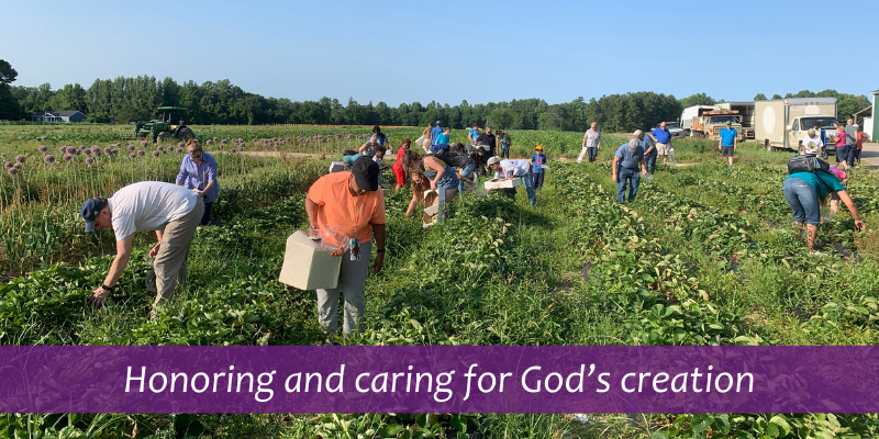 Honoring and caring for God's creation